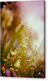 Weeded Desire - Light Acrylic Print