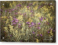 Weeds In Late Summer Acrylic Print