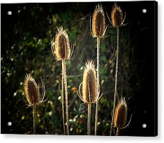Weeds Acrylic Print by Michael L Kimble