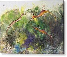 Weedy And Ribbon  Sea Dragons Acrylic Print by Nancy Gorr