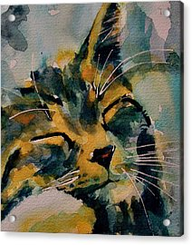 Weeeeeee Sleepee Acrylic Print by Paul Lovering