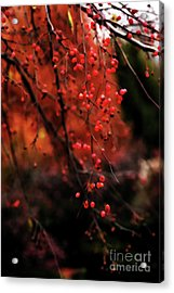 Weeping Acrylic Print by Linda Shafer