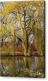 Weeping Willow  Acrylic Print by Isabel Poulin