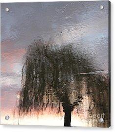 Weeping Willow Acrylic Print by Karin Ubeleis-Jones