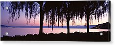 Weeping Willows, Lake Geneva, St Acrylic Print by Panoramic Images