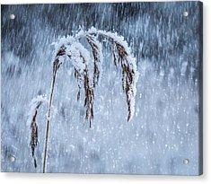 Weight Of Winter Acrylic Print by Janne Mankinen