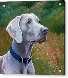 Weimaraner Dog Acrylic Print by Alice Leggett