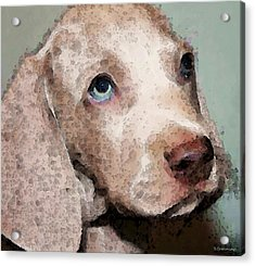 Weimaraner Dog Art - Forgive Me Acrylic Print by Sharon Cummings