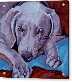 Acrylic Print featuring the painting Weimaraner by Pattie Wall