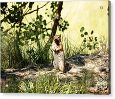 Welcome Acrylic Print by Michelle Bentham