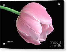 Welcome Spring In Pink Acrylic Print by Jeannie Rhode