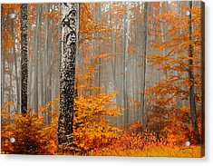 Welcome To Orange Forest Acrylic Print by Evgeni Dinev
