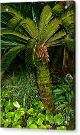 Welcome To The Tropics Acrylic Print