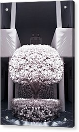 Welcome Tree Infrared Acrylic Print by Adam Romanowicz