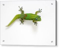 Well Hello There Acrylic Print by Denise Bird