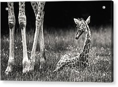 Well Protected Acrylic Print