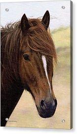 Welsh Pony Painting Acrylic Print