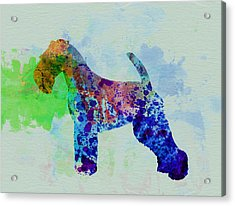 Welsh Terrier Watercolor Acrylic Print by Naxart Studio