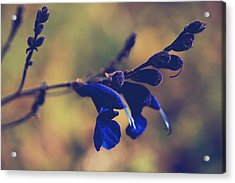 We're Two Of A Kind Acrylic Print by Laurie Search