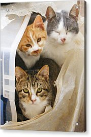 We're Watching You Acrylic Print