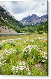 West Elk Wildflowers Acrylic Print