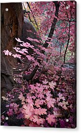 West Fork Fall Colors Acrylic Print