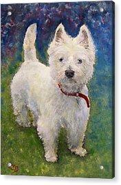 West Highland Terrier Holly Acrylic Print