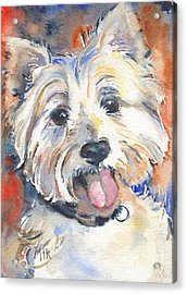 West Highland Terrier Acrylic Print