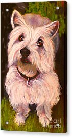 West Highland Terrier Reporting For Duty Acrylic Print