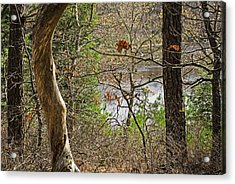 West Pond In The Woods Acrylic Print by Frank Winters