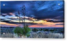 West Texas Yuccas Acrylic Print