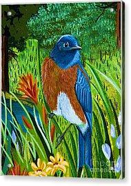 Acrylic Print featuring the painting Western Bluebird by Jennifer Lake