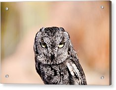 Western Screech Owl Acrylic Print by Bonnie Fink