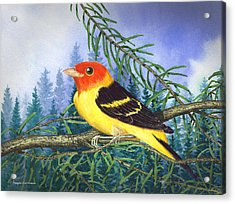 Western Tanager In Yosemite Acrylic Print