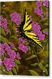 Western Tiger Swallowtail And Evening Phlox Acrylic Print by Rick Bainbridge