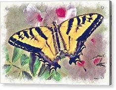 Western Tiger Swallowtail Papilio On Flower Acrylic Print by Robert Jensen