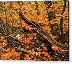 Westfork Foilage Acrylic Print