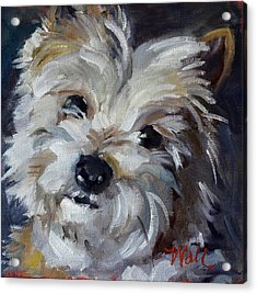 Acrylic Print featuring the painting Westie Mix by Pattie Wall