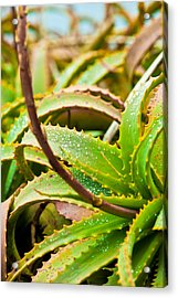 After The Rain Acrylic Print by Melinda Ledsome