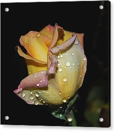 Acrylic Print featuring the photograph Wet And Wonderful by Judy Hall-Folde