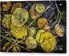 Wet Aspen Floor Acrylic Print