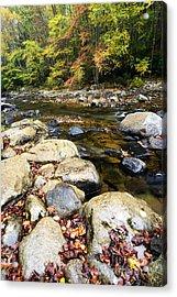 Wet Autumn Day Acrylic Print by Thomas R Fletcher