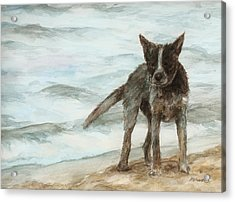 Wet Dog - Cattle Dog Acrylic Print