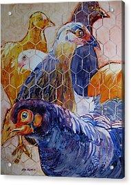 Wet Hens Acrylic Print by Kris Parins