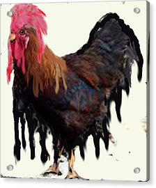 Wet Rooster Acrylic Print by Roger Swezey