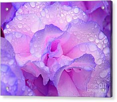 Wet Rose In Pink And Violet Acrylic Print