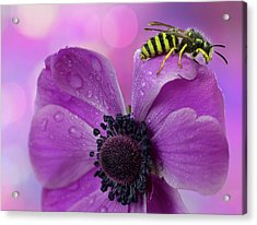 Wet Wasp Acrylic Print by Mikroman6