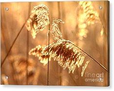 Wetland Sunrise Acrylic Print