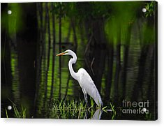 Wetland Wader Acrylic Print by Al Powell Photography USA