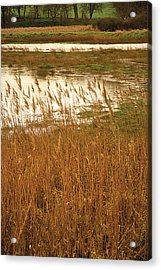 Acrylic Print featuring the digital art Wetlands by David Davies